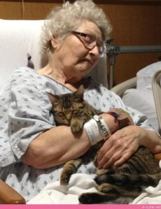Cats comfort a sick family member.Picture: E-Cute