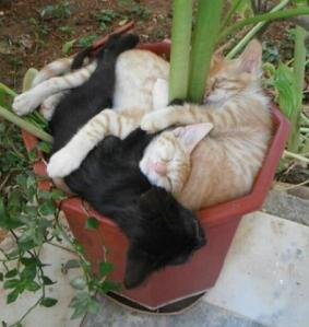 Sometimes yur buddies find a good place for a nap and you just have to join them.