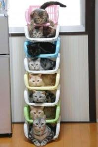 Cats galore, but organized! Picture: Troy Perault