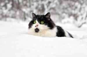 And My Cat...in the snow