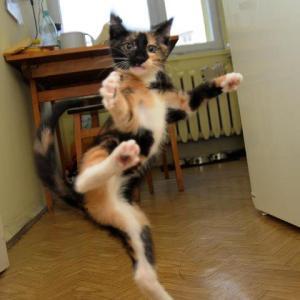 And my cat...judo