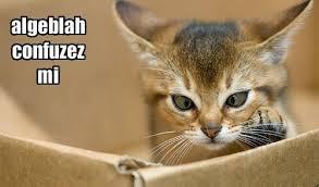 cat grammar5