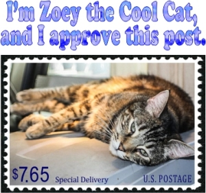 Cat im-zoey-the-cool-cat-and-i-approve-this-post59