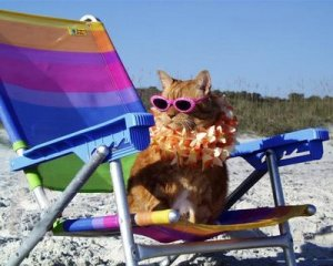 cat-on-beach1 Travel Times Mag