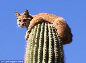 cat on cactus Curt