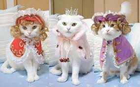 cats dressed up