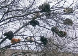 cats  in trees 1