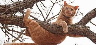 cats in trees oops