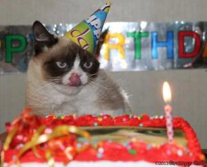 grumpy cat and cake