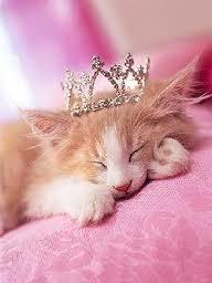 princess cat