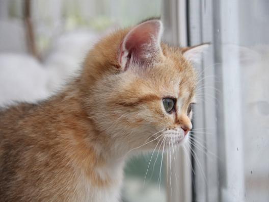 Shhhhh. I'm watching the garden critters.