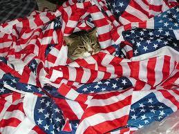 cat patriotic
