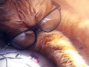cat sleeping - academic