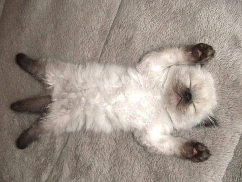 Exhausted Kitten