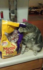 CAt Swag  cat and cat food bag