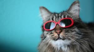 cat with shades imagesCAOWRXCZ