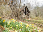Daffodils on the Appalachian Trail. Photo: Terry Bliss