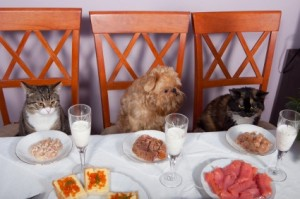 eat at dinner table 2pawsupinc.