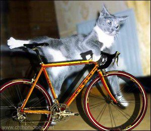 Bicycle Cat The Battle Cats