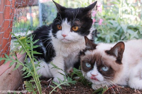 Pokey and Grumpy Cat in the Garden