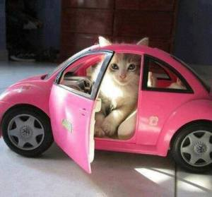 kitten in pink car