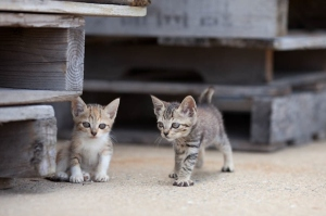 Kittens on Japan Cat Island