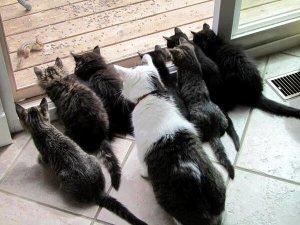 cats- chipmunks  dailyflicksandpicks. com