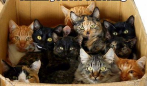cats in box - kittens