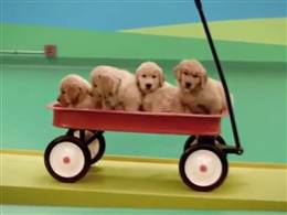 puppies in wagon ...Beneful
