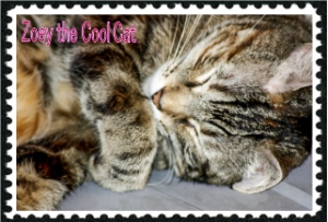 Zoey the Cool Cat Ray Russel photo