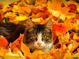 cats playing in leaves