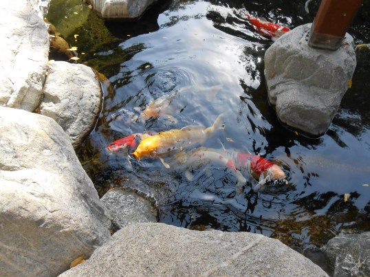 Look closer. This is a Koi Pond.