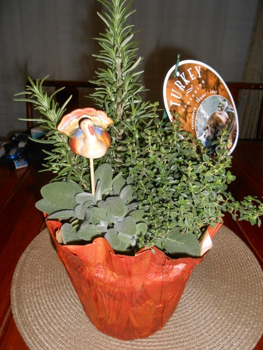 Getting ready for Thanksgiving...Rosemary, Sage, and Thyme