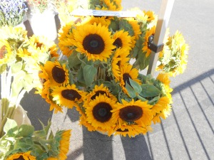 Sunflowers. Janice Heck photo