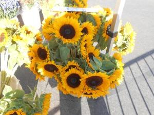 Sunflowers. Janice Heck photo