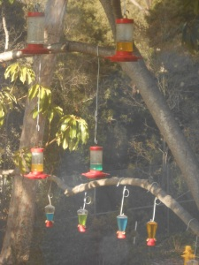 Through the window: hummingbird feeders