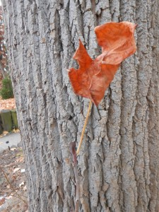 One leaf on a stem...