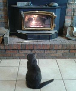 One cat in front of the fireplace... Photo: Barbara VanAusdall