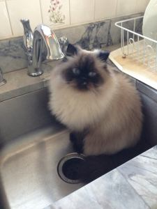 One cat in the sink... Photo: Judith Krom