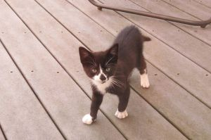 One little lost kitten on the back deck... Dawn Ellis photo