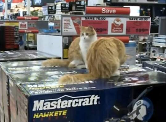 cats at Canadian tire store