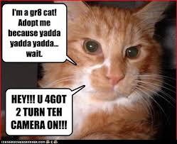 yadda cat 2 cheezburger.c om