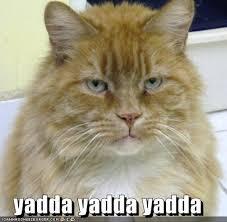 yadda cat  Cheezburgr