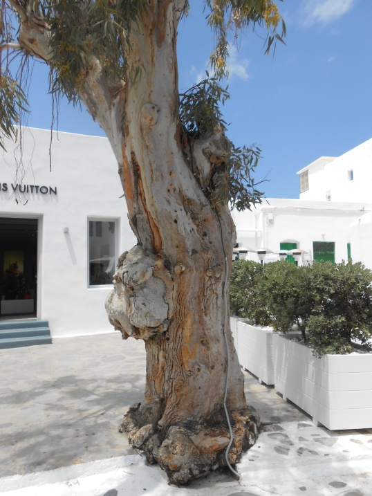 Oddball tree in Mykonos Janice Heck photo