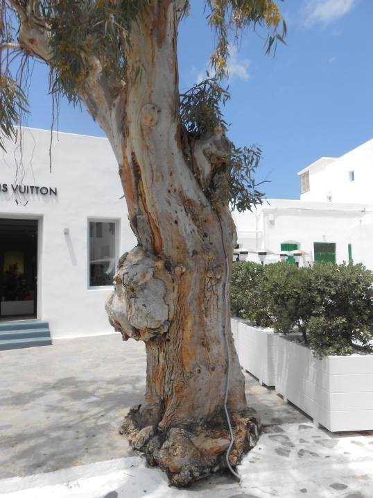 Oddball tree in Mykonos Janice Heck photo